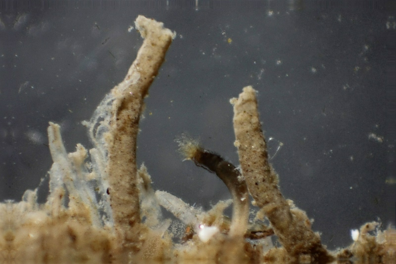slikkokerwormen